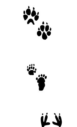 how to make animal tracks