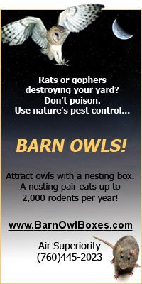 barn owls are natures pest control