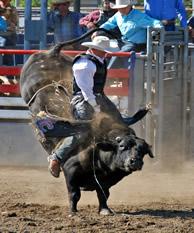 bullrider_1.jpg