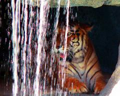 tiger-waterfall-sm.jpg