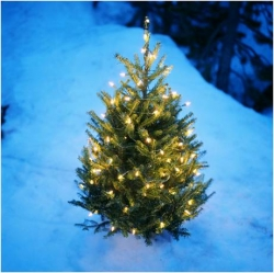 december 22 2014 san diego according to the national christmas tree association 25 30 million holiday trees are sold each year in the united states and