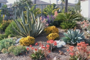 After Tossing The Turf: Garden Design (with Drought Tips From Helix Water  District)
