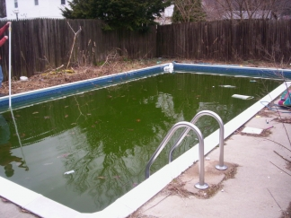 The mosquitoes are coming help fight the bite east county magazine for Can mosquitoes breed in swimming pools